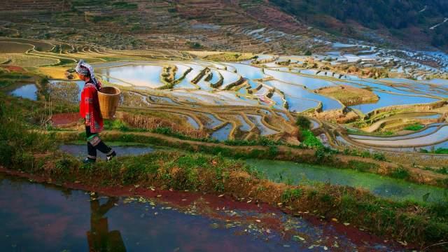 Рисовые террасы Китая
