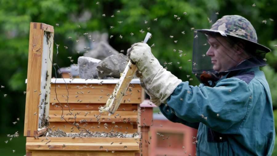 У пчеловодов может появиться специальное ведомство и господдержка