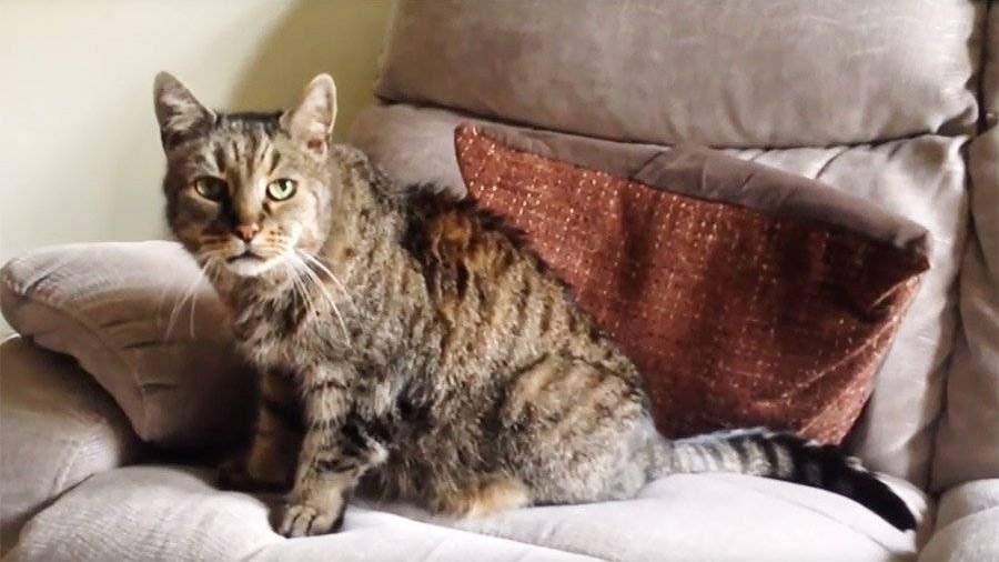 Умер кот 15 лет