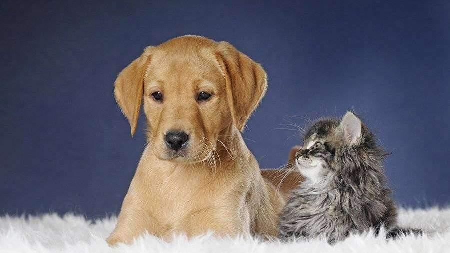 Кошки и собаки в доме снижают риск аллергии у детей ...