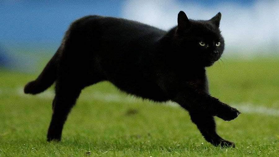 Черный кот ворвался на поле в матче чемпионата Англии по футболу ...