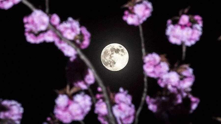 v-nocy-s-19-na-20-aprela-jiteli-zemli-nabludali-rozovuu-lunu