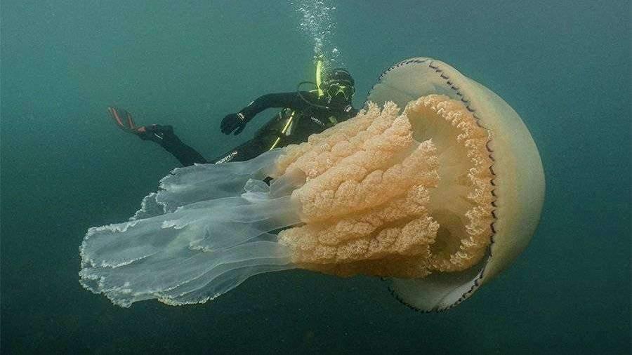 dayveri-sdelali-foto-meduzi-razmerom-s-celoveka