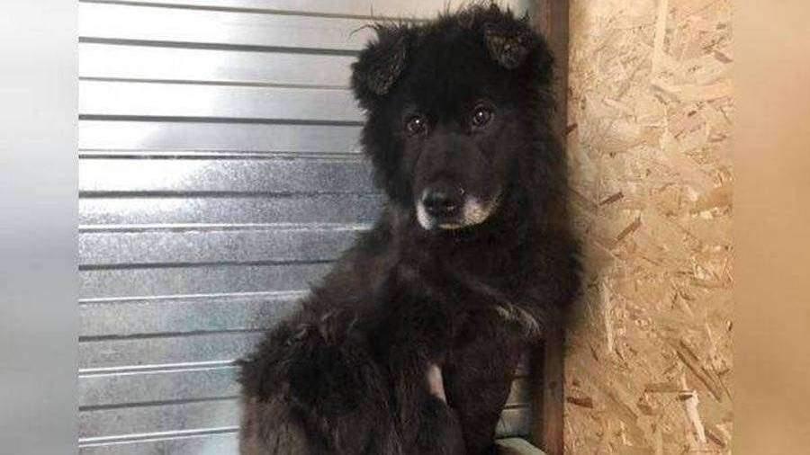 В Новом Уренгое спасли сидевшую в канализационной яме восемь лет собаку
