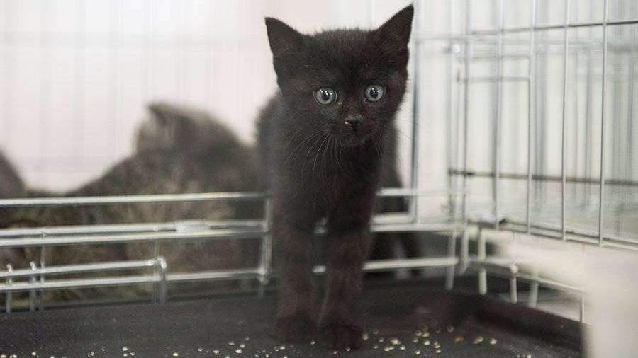 Компания Sinogene в Китае собирается начать массовую продажу клонированных котов