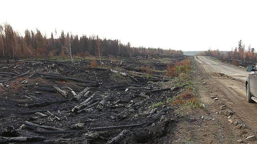 Медведев распорядился проверить версию о намеренных поджогах лесов