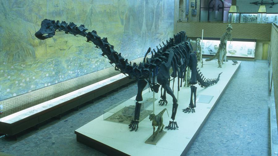 ucenie-opisali-posledniy-deny-susestvovania-dinozavrov