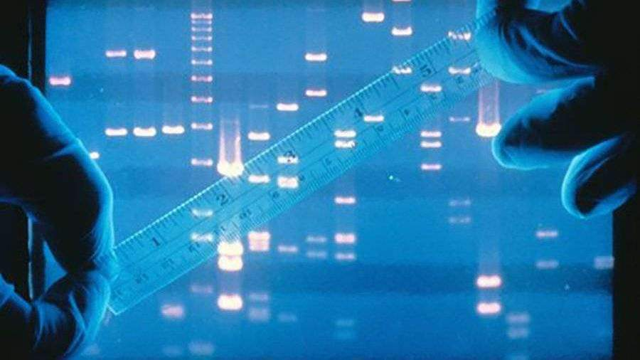 Ученые раскрыли продлевающие жизнь механизмы