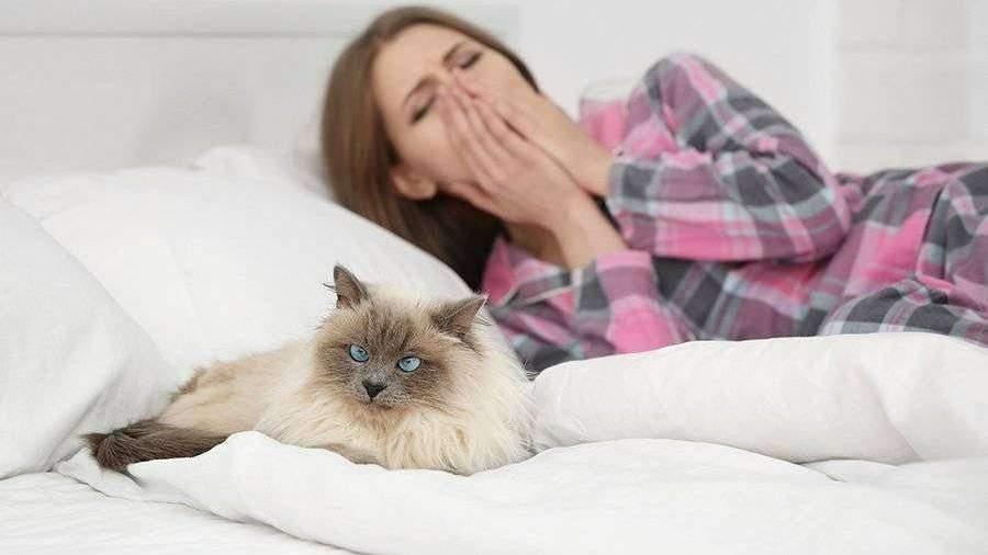 Ученые раскрыли причины аллергии на кошек