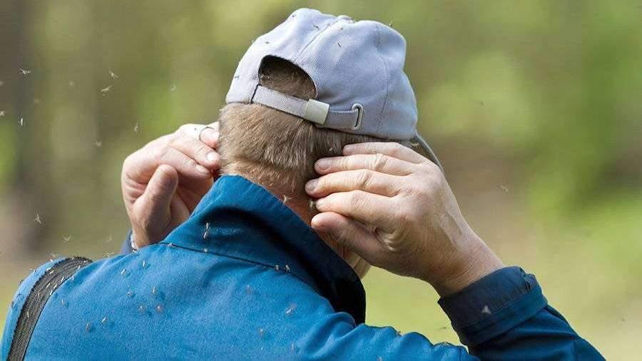 В Якутии пожаловались на нашествие комаров