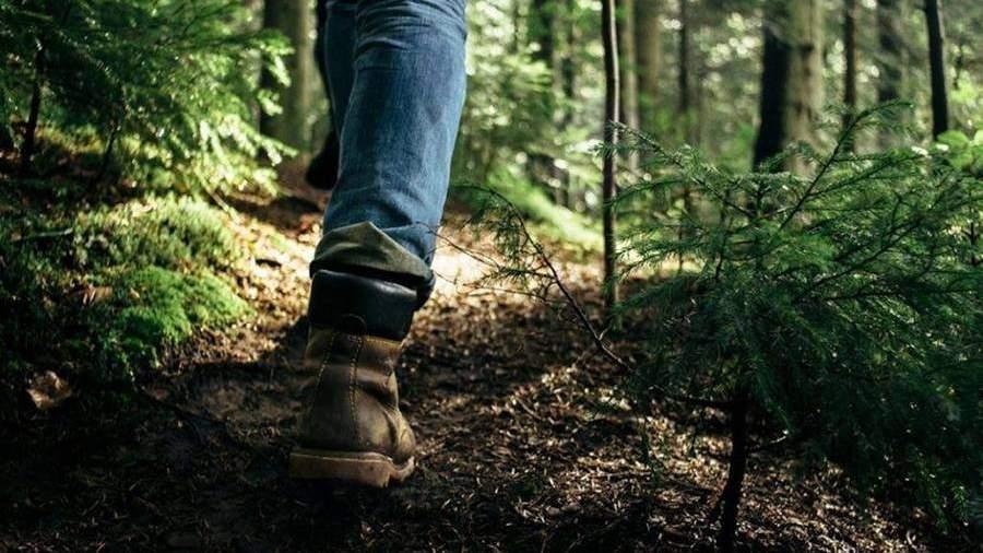 Жителям Подмосковья напомнили правила использования гаджетов в лесу