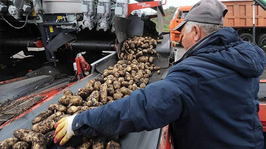 ПФР напомнил об изменениях в начислении выплат пенсионерам за «сельский стаж»