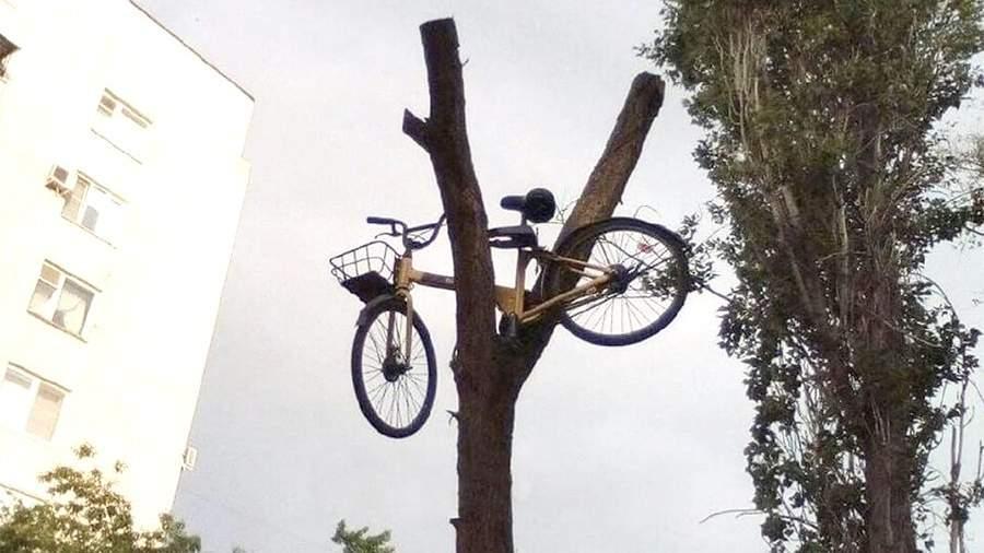сломанный влосипед на дереве Волгоград