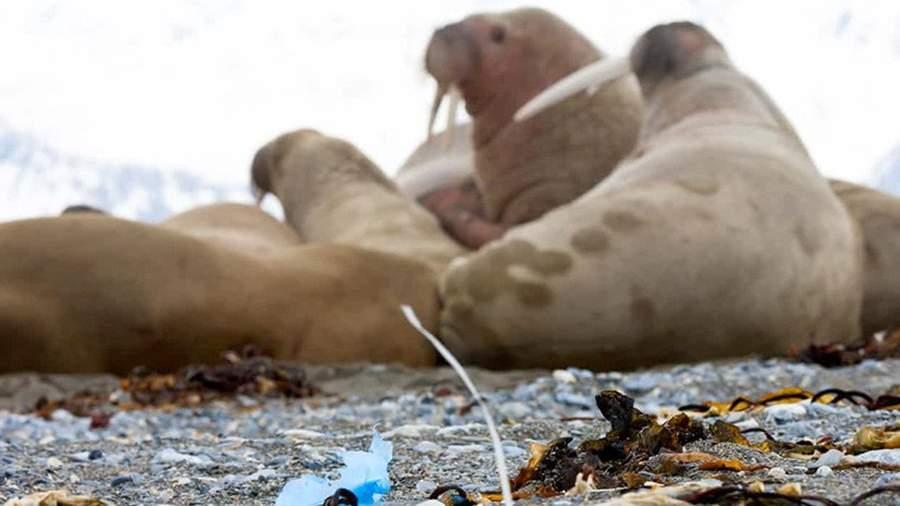 Пластиковый мусор на побережье одного из островов в Арктике