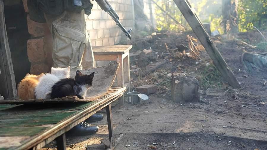 коты донецк лнр бойцы