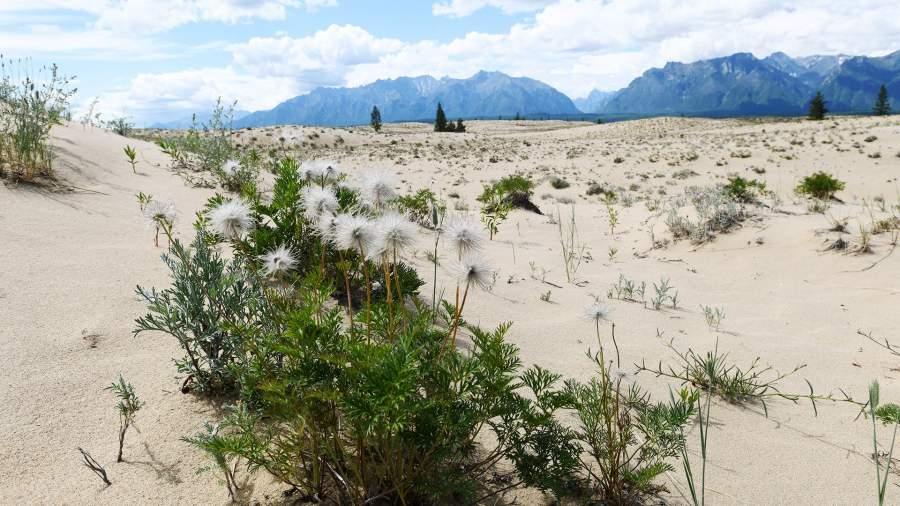 Урочище Чарские пески - песчаная пустыня размером примерно 10 км на 5 км в Забайкальском крае