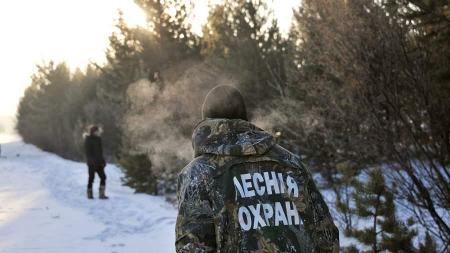 Операция «Ёлка»: в России начались рейды из-за новогодних лесорубов