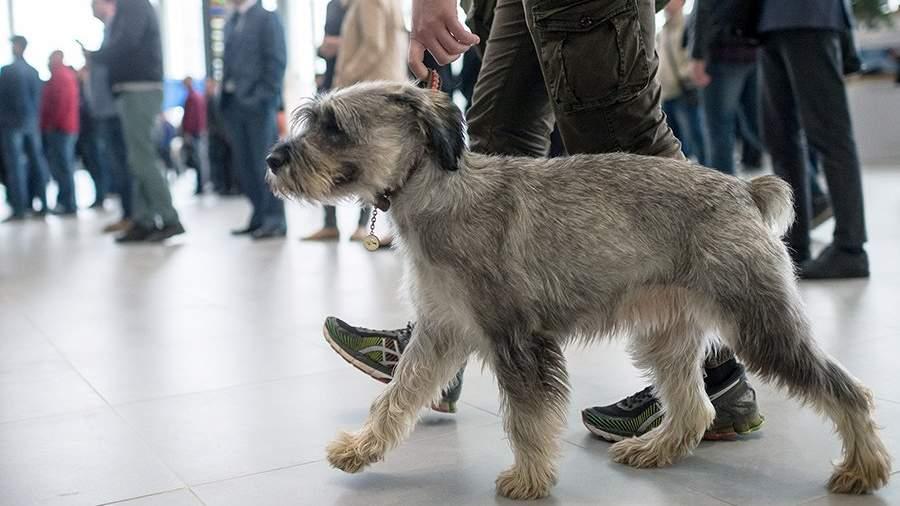 Человек с собакой в аэропорту