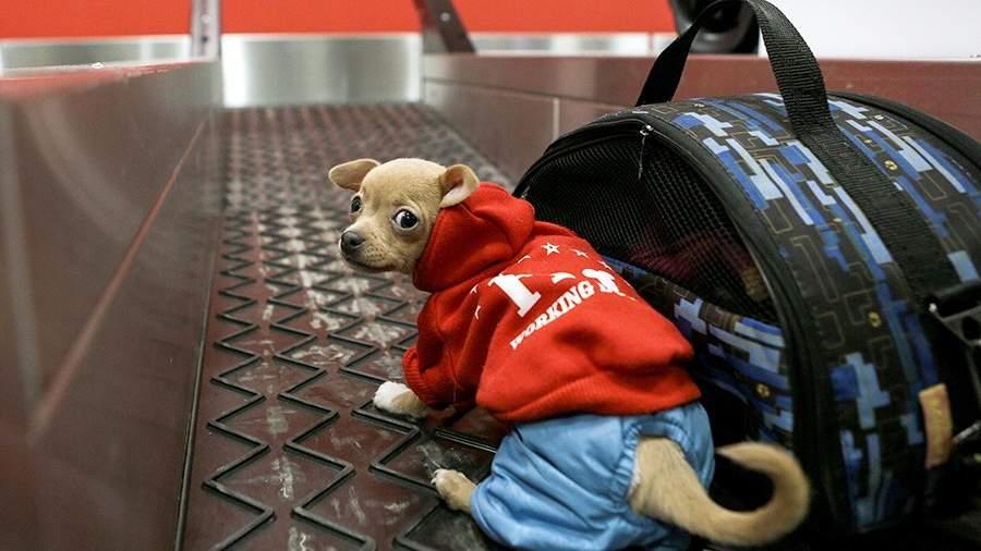 Собака и багаж