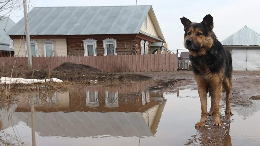 Собака на улице в поселке в Татарстане, подтопленной в результате разлива реки