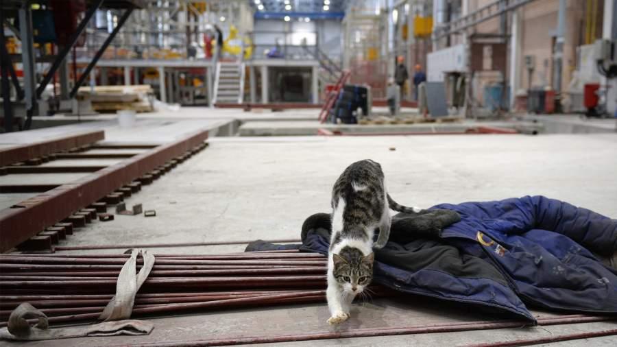 кошка на территории завода