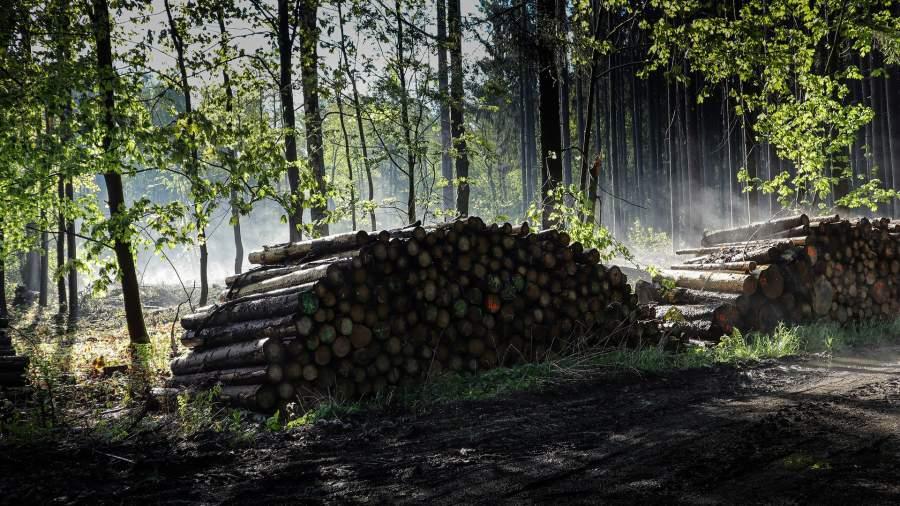 Превышение в лесу: на Алтае завели дело на чиновника Минприроды края