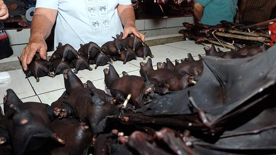 Продажа летучих мышей на рынке в Индонезии