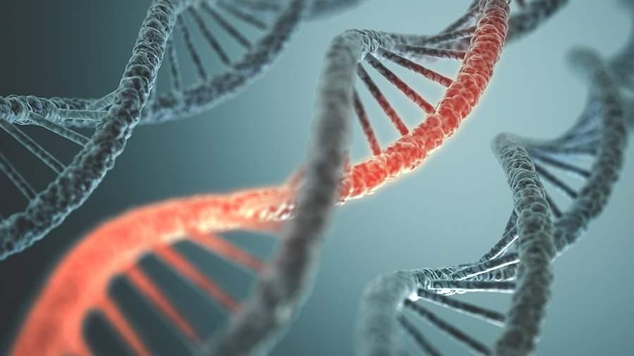 Структура ДНК человека