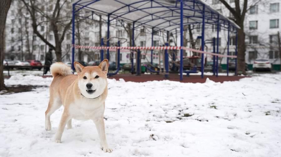 Собака во дворе жилого дома