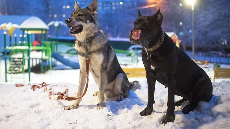 Домашние собаки на прогулке в одном из московских дворов