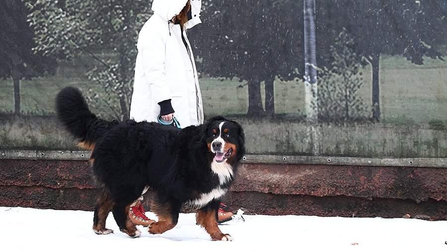 Девушка выгуливает свою собаку на улице