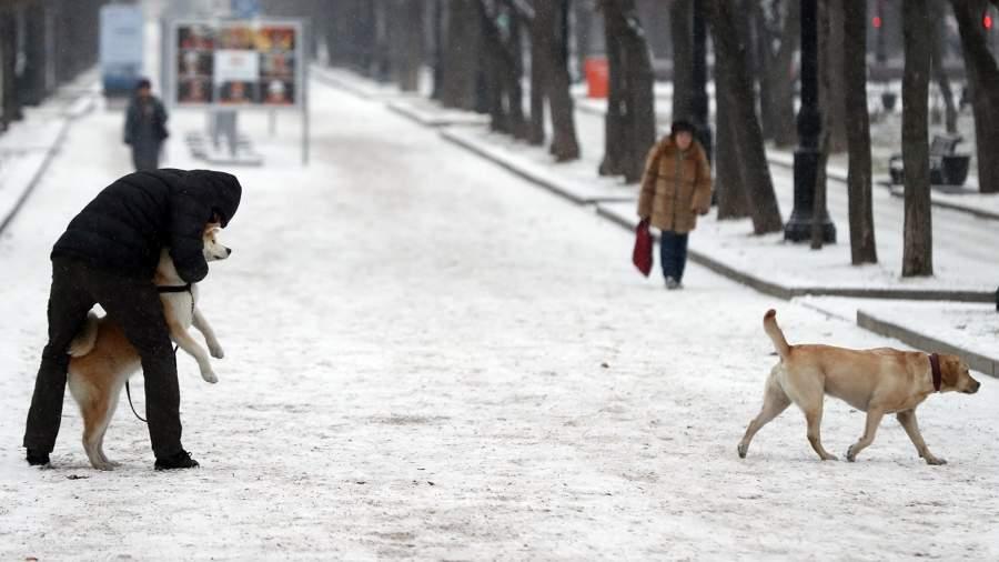 Мужчина гуляет с собаками на одном из бульваров