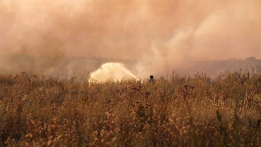 Степной ветер: как бороться с опустыниванием земель юга России