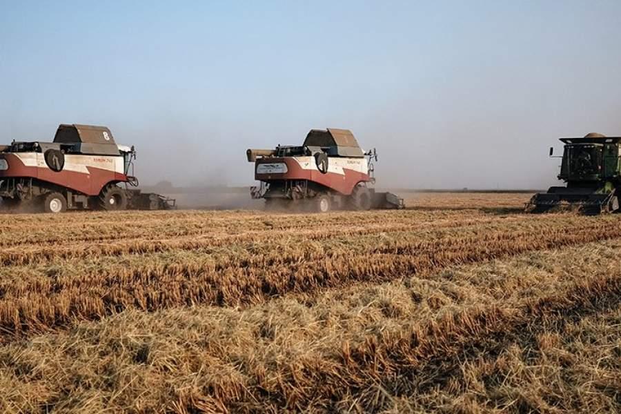 картинки урожая краснодарского края