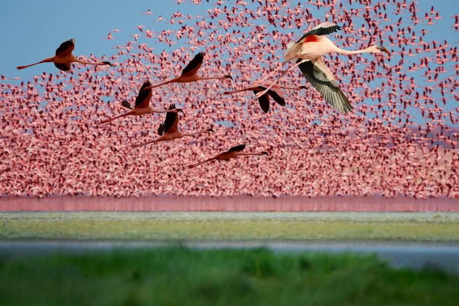 Озеро фламинго Накуру (Кения)