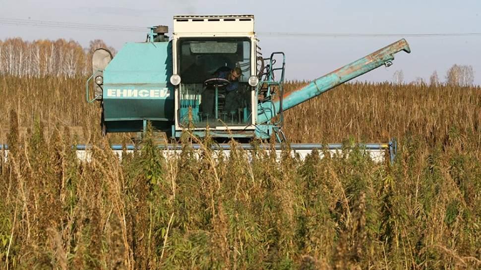 Сельское хозяйство конопля как бросить курить траву марихуану